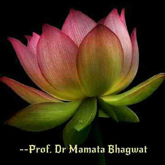 Dr. Mamata Bhagwat's profile on Curofy
