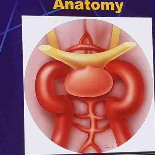 Dr. Prankul Singhal's profile on Curofy