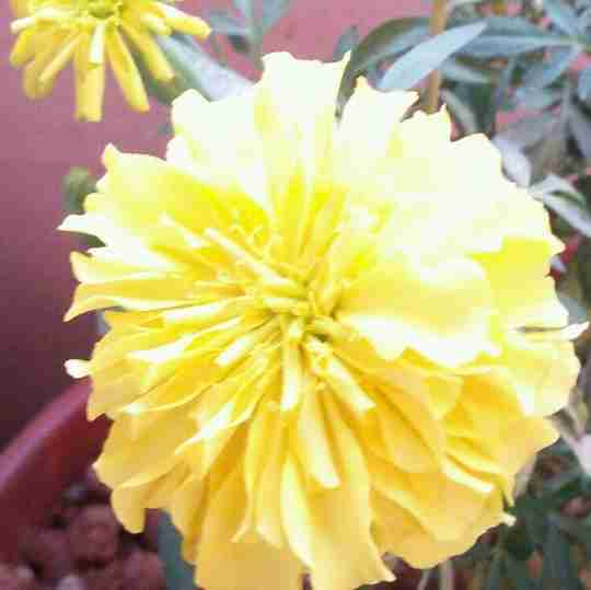 Dr. Sahiti Janaswamy's profile on Curofy