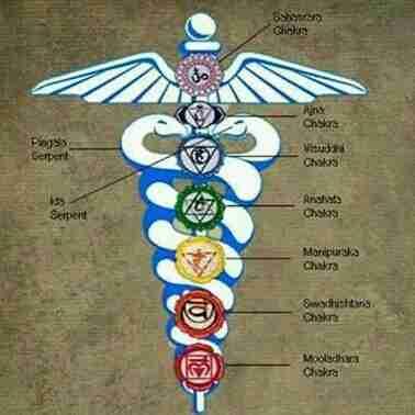 Dr. Devashi Karangiya's profile on Curofy